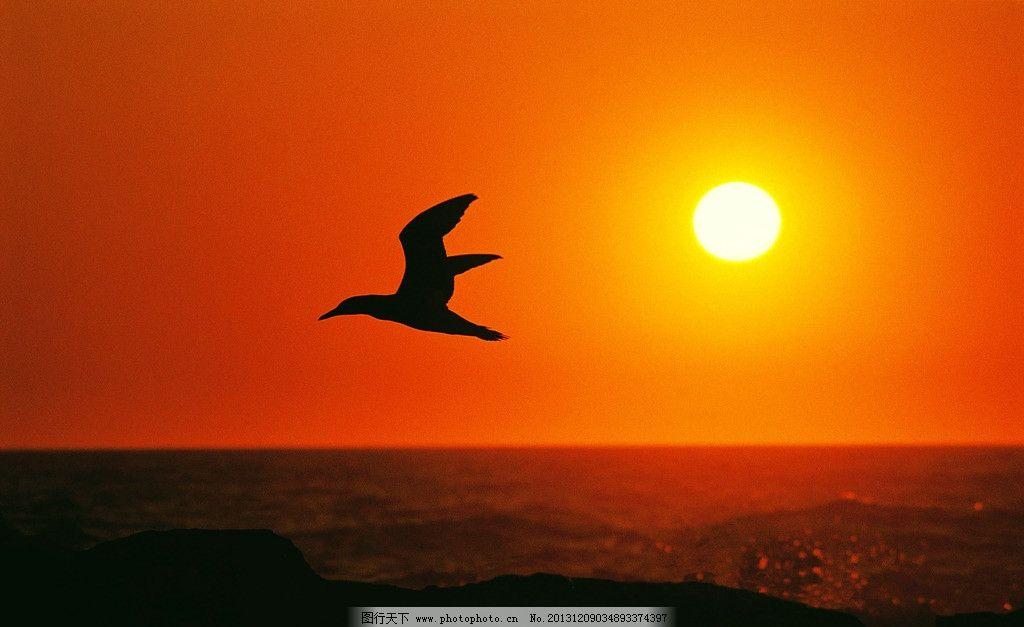 晚霞 天空 落日 背景 夕阳 鸟类 自然风景 自然景观 摄影 350dpi jpg