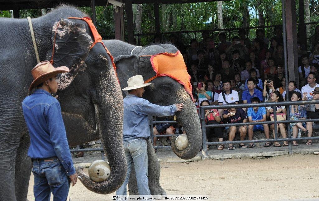 泰国 大象表演 大象 动物表演 表演 野生动物 生物世界 摄影 300dpi