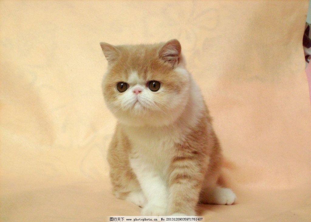 可爱猫头像胖小小红