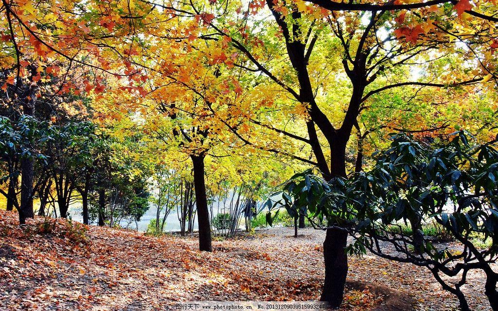北京植物园秋色 植物园 秋天 绿树 红叶 草地 北京植物园 园林建筑