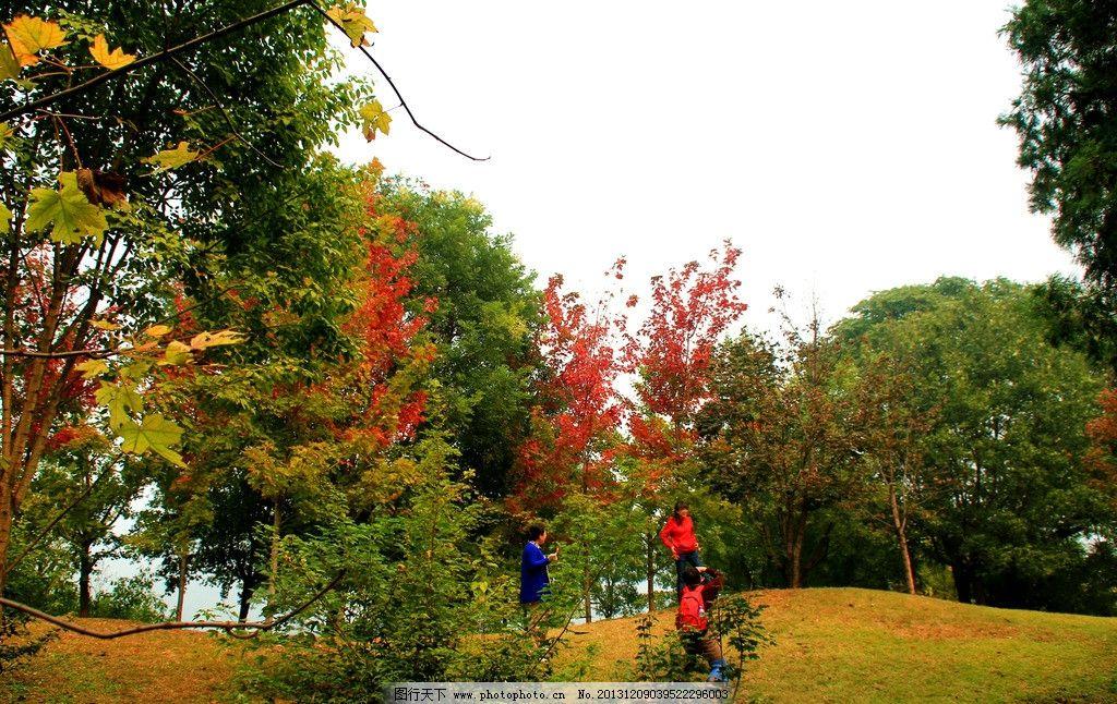 北京植物园秋色 植物园 秋天 大树 红叶 小路 草地 游人 北京植物园