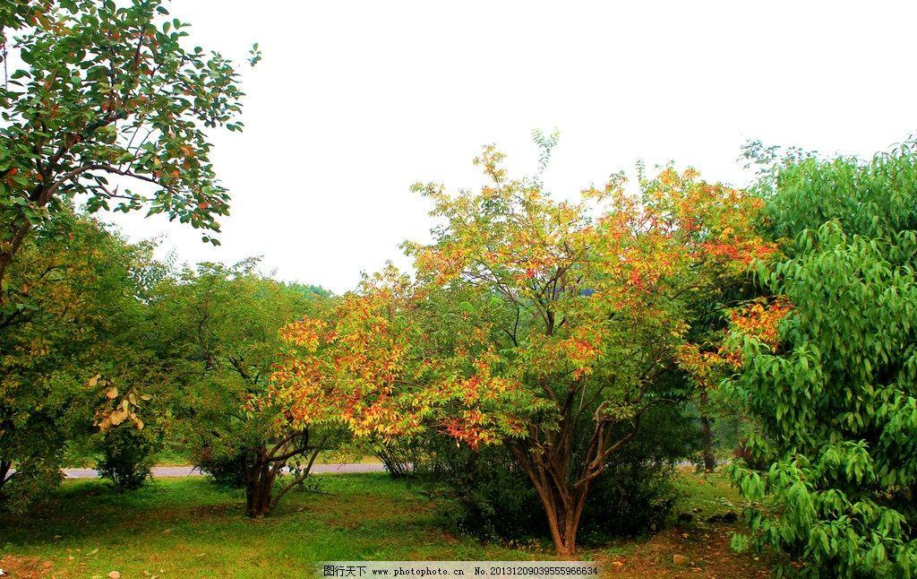 北京植物园秋色 植物园 秋天 绿树 红叶 草地 蓝天 北京植物园 园林