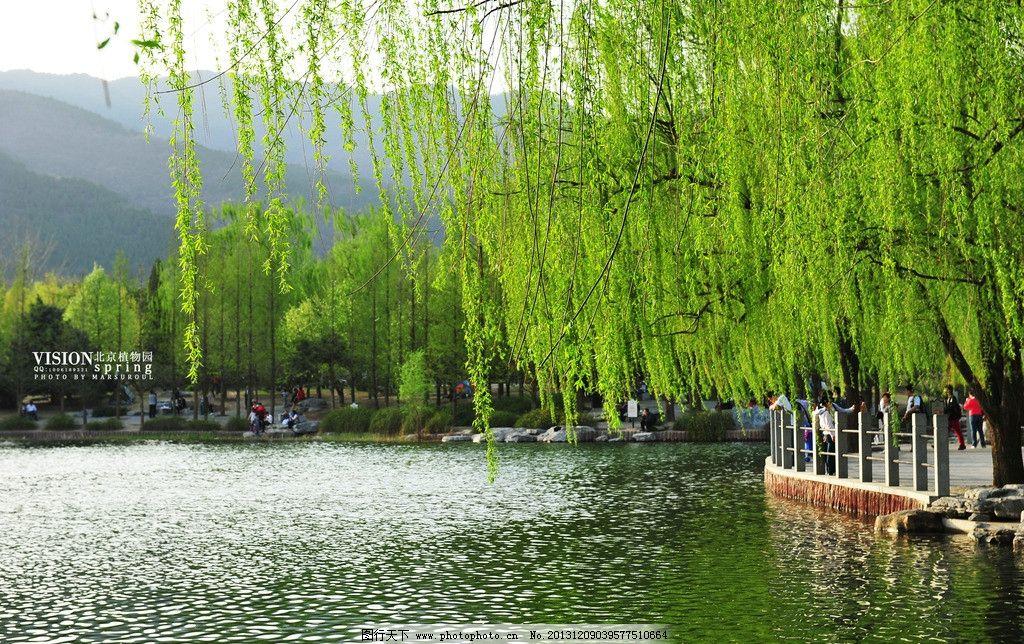 北京植物园春色图片