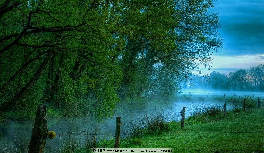 清晨 早晨 黎明 草地 草坪 草丛 草场 草原 森林 树林 树叶 落叶 绿叶