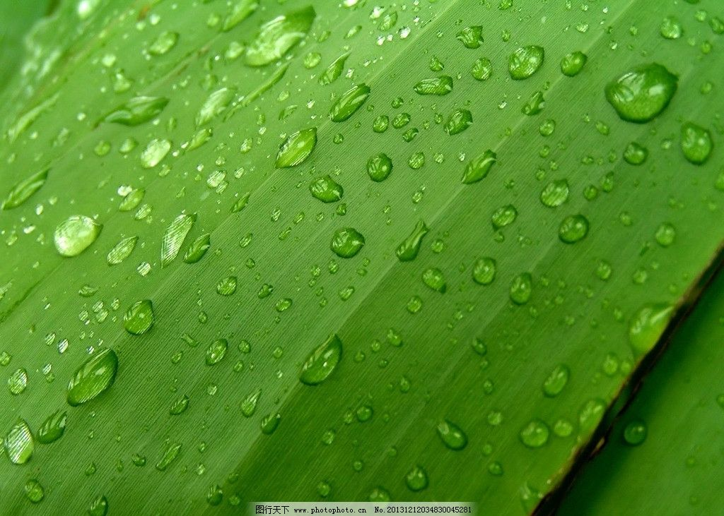 绿色 桌面壁纸 背景 素材