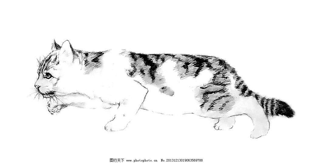 手绘猫 手绘 猫 素描 铅笔画 动物 绘画书法 文化艺术 设计 300dpi