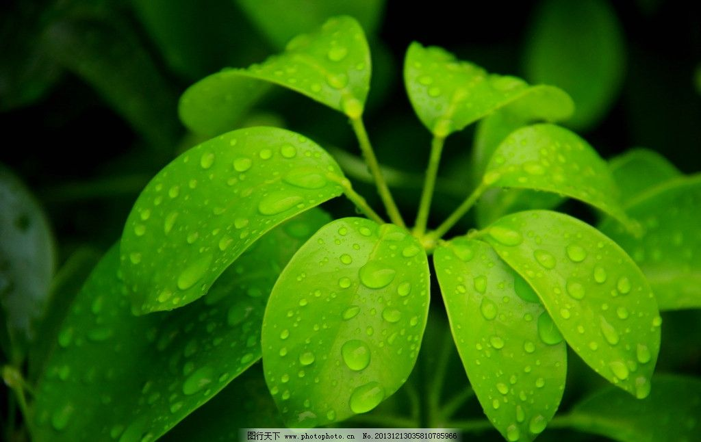 雨后 雨滴 植物 希望 绿色 纯粹 树木树叶 生物世界 摄影 350dpi jpg