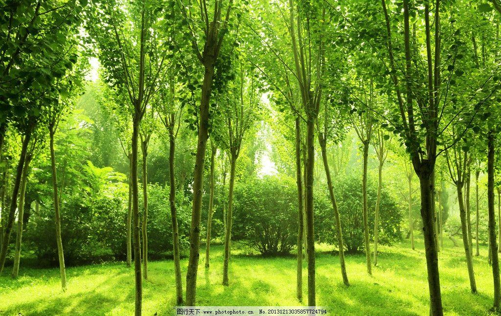 树林 绿色 大自然 天然 背景 丛林 树木树叶 生物世界 摄影 72dpi jpg