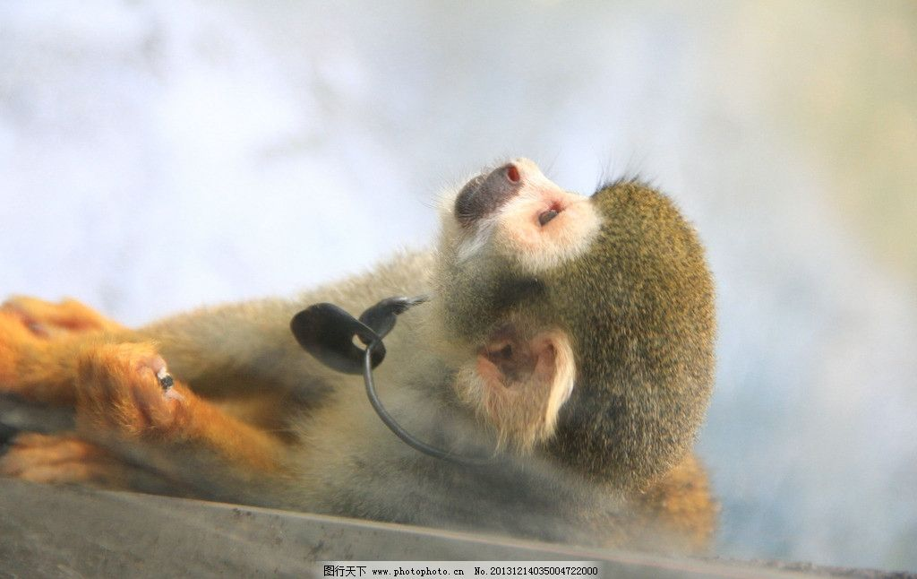 猴子 动物园 猴子的素材 郊游 动物 灵长类 野生动物 生物世界 摄影