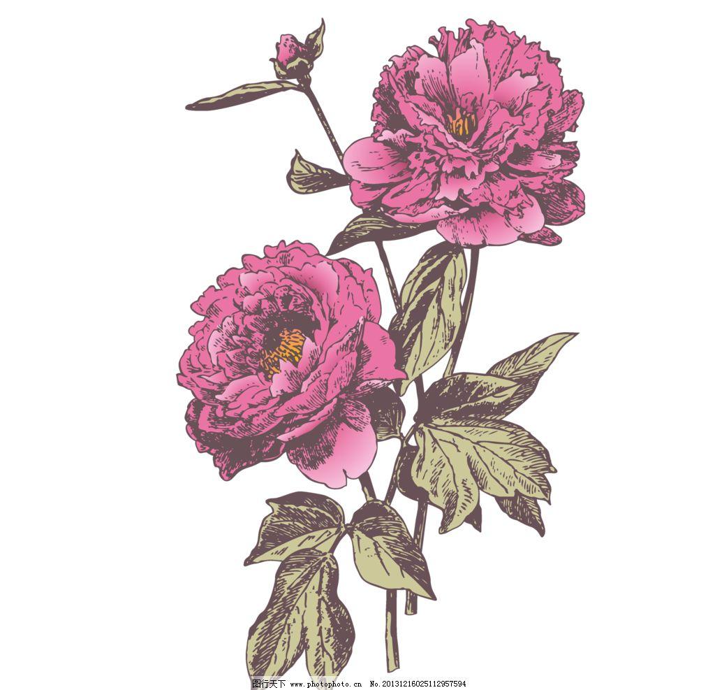 复古 花卉 素材 手绘 牡丹 芍药 花草 生物世界 设计 28dpi png