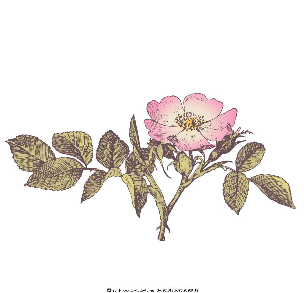 复古手绘花卉图片