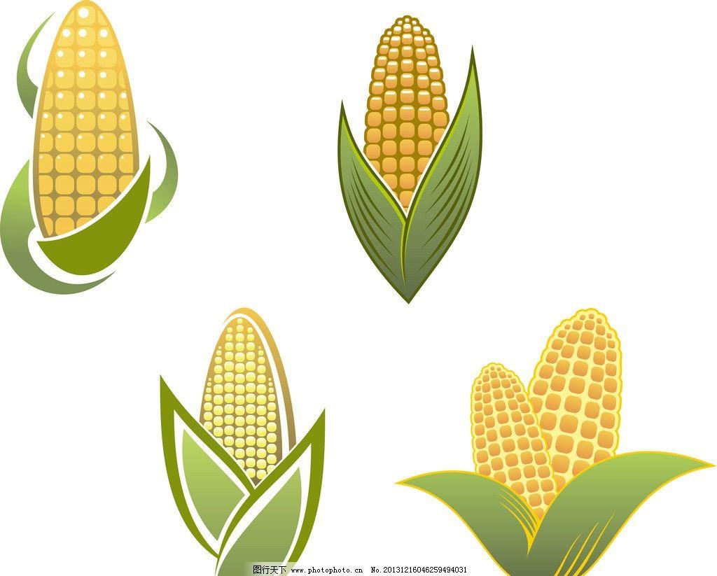 玉米 矢量玉米 餐饮美食 手绘 生活百科 eps 生物世界 餐饮美食素材