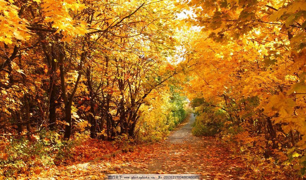 公园小径简笔画_金秋树林树林枫叶枫树落叶秋天公园香山大树金秋森林