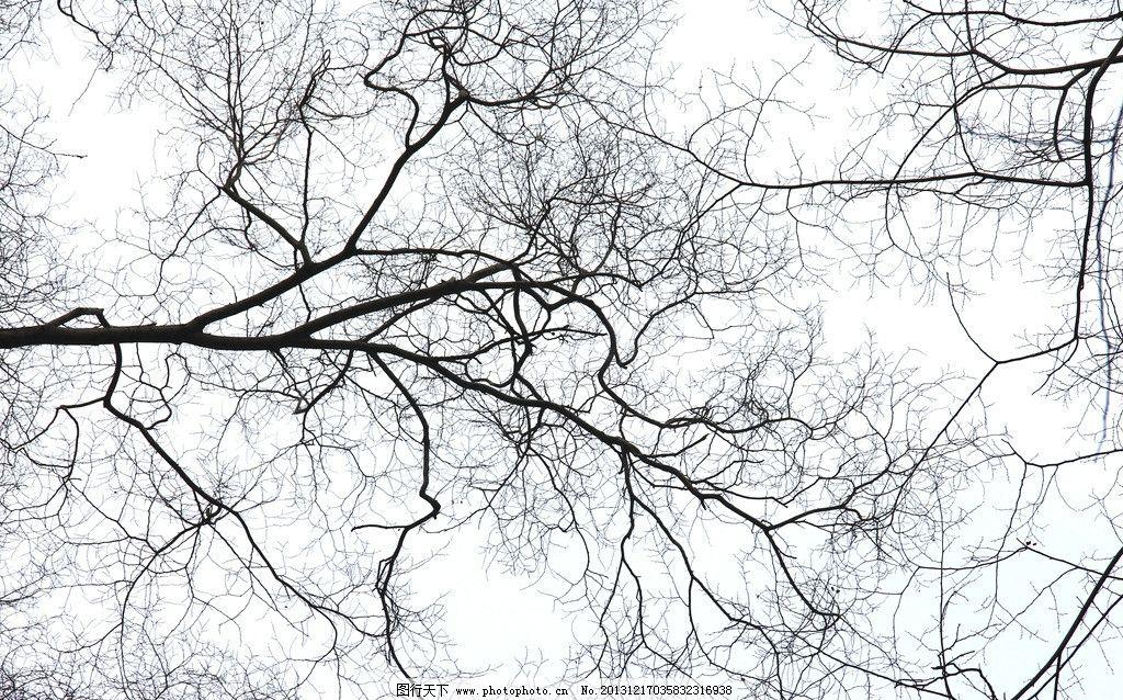 树枝 树 枝 杈 分支 黑色 白色 树木树叶 生物世界 摄影 72dpi jpg