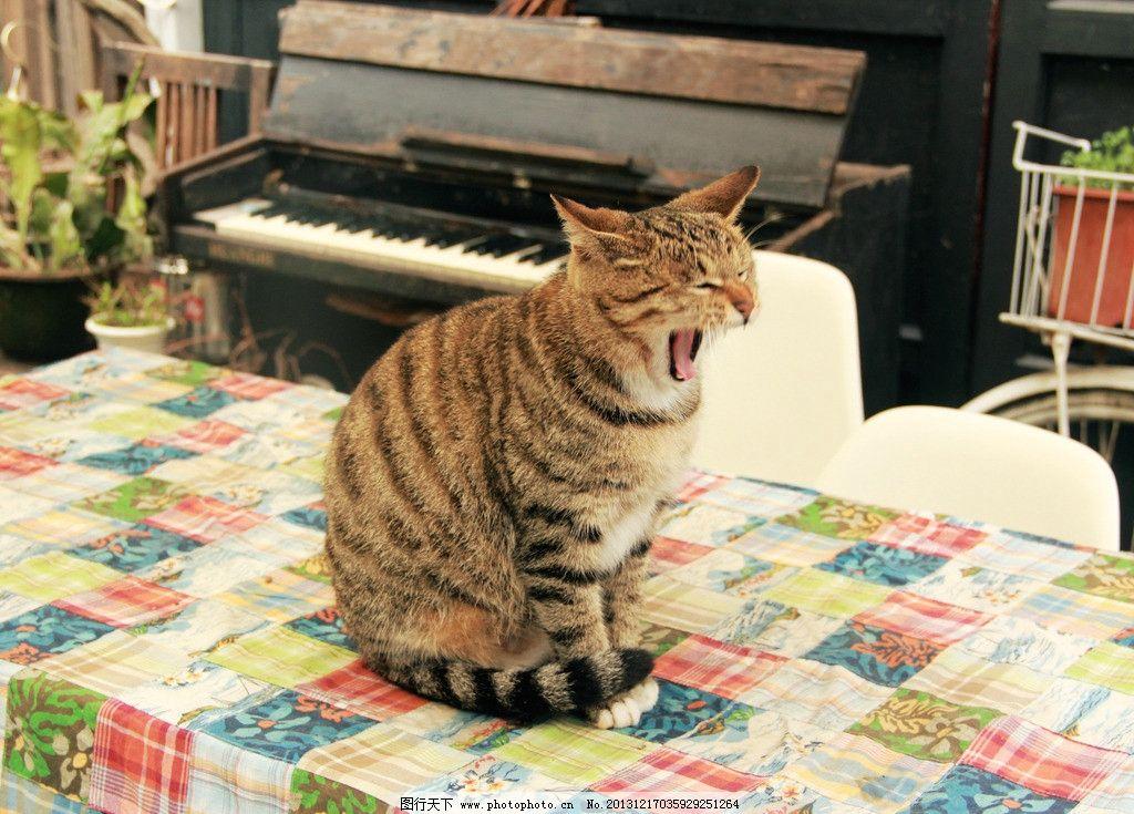 打哈欠的猫 哈欠 猫 条纹 动物 半蹲 家禽家畜 生物世界 摄影 72dpi j