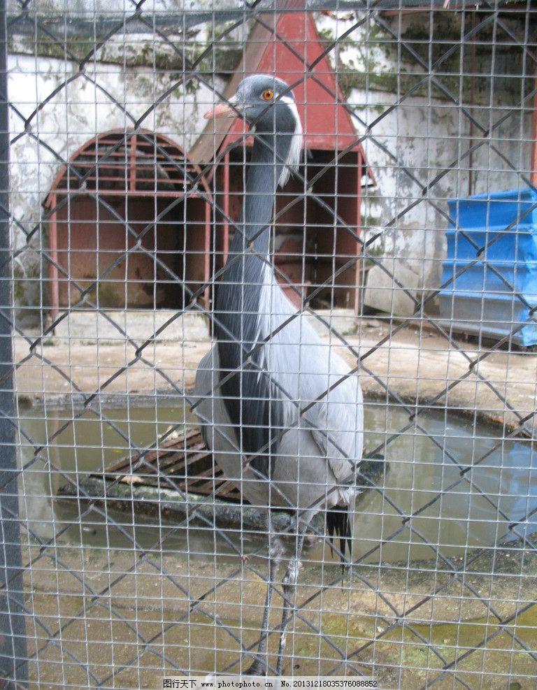 白头鹤 泉州东湖公园 动物园 鸟 鹤 站立的鸟 鸟类 生物世界 摄影 180
