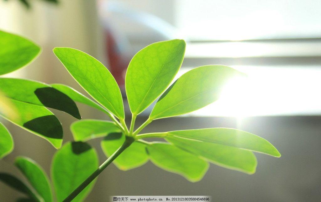 绿色 植物 桌面图片