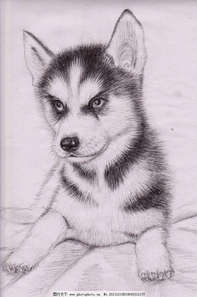 哈士奇 狗狗 手绘 画画 素描 萌动 小动物 绘画 艺术 绘画书法 文化