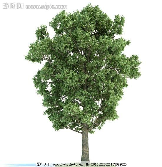 树木 景观树木 园林 室外 室内 模型 室内盆栽与景观树木模型 室内
