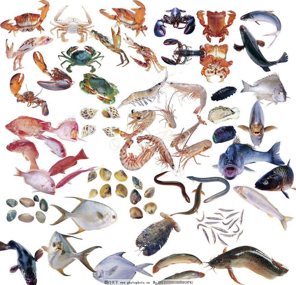 鱼类合集 虾 螃蟹 鲤鱼 鲶鱼 贝 源文件
