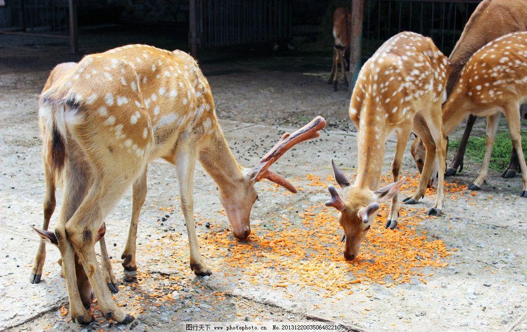 摄影图库 生物世界 野生动物    上传: 2013-12-20 大小: 12.