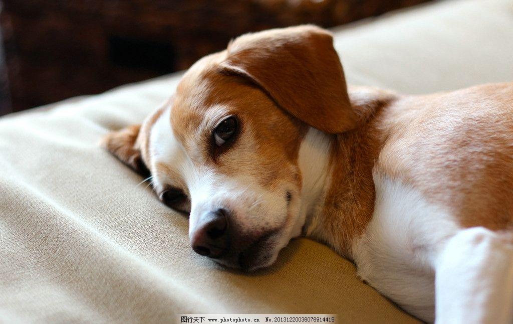 动物睡觉温馨图片