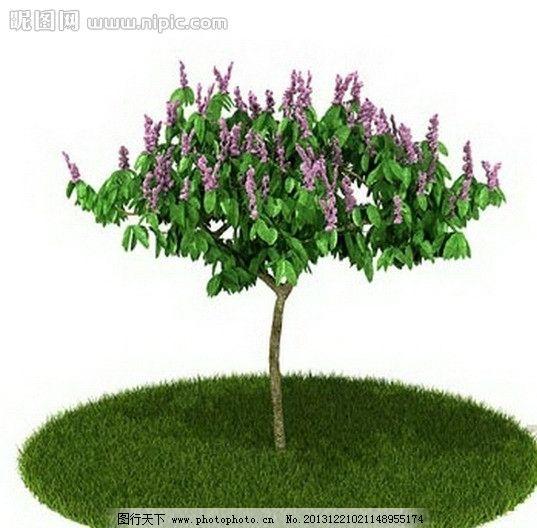 植物 树木 景观树木 园林 室外 室内 盆栽 模型 室内盆栽与景观树木