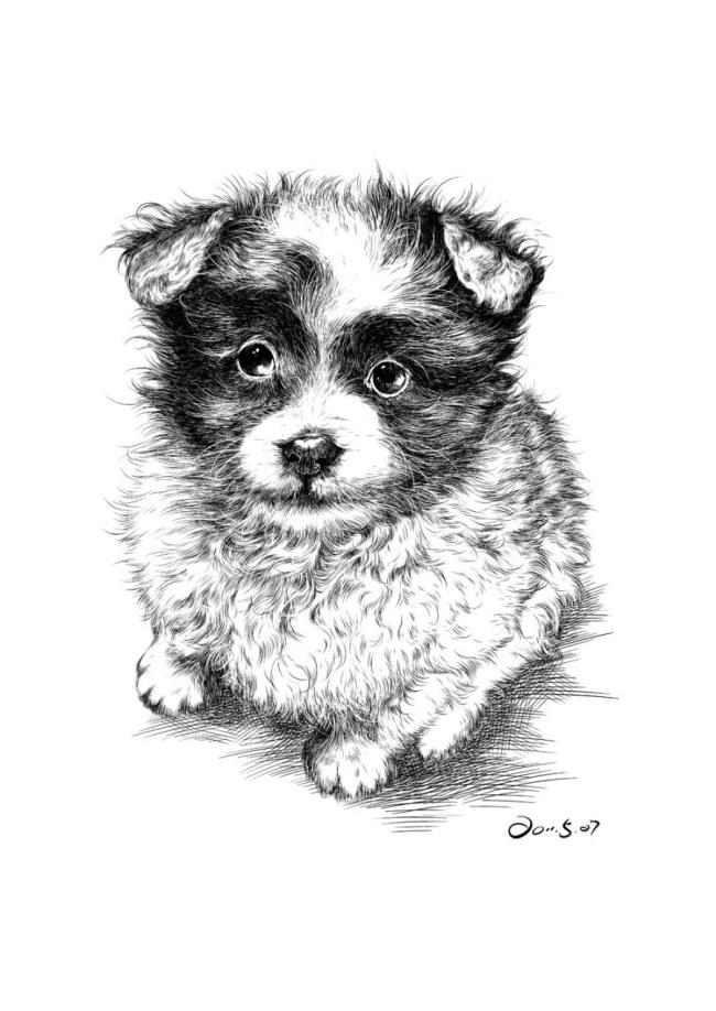 动物钢笔画 动物钢笔画免费下载 素描 小狗 图片素材 生物世界