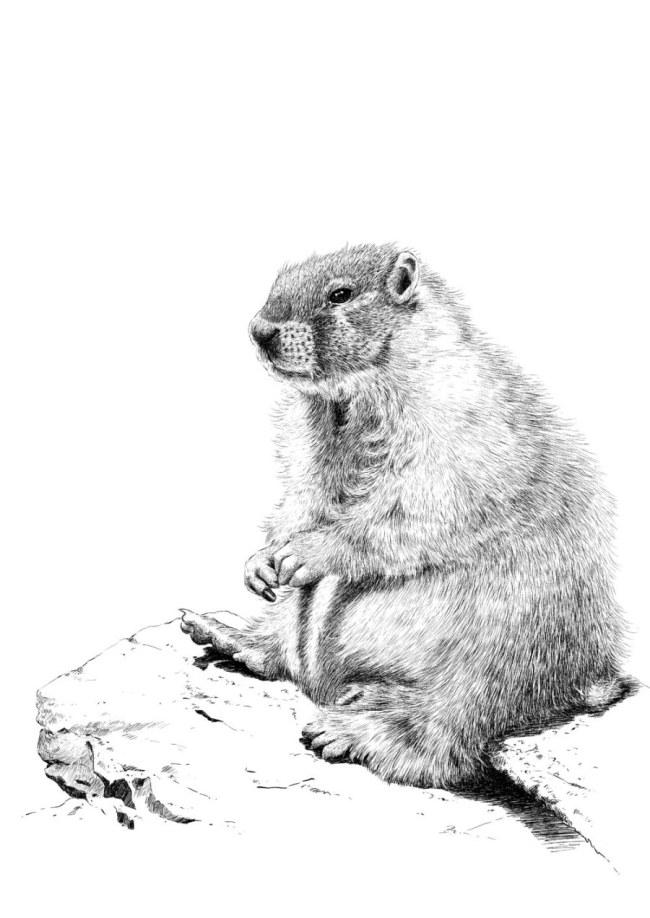 动物钢笔画 动物钢笔画免费下载 素描 肖像 图片素材 生物世界