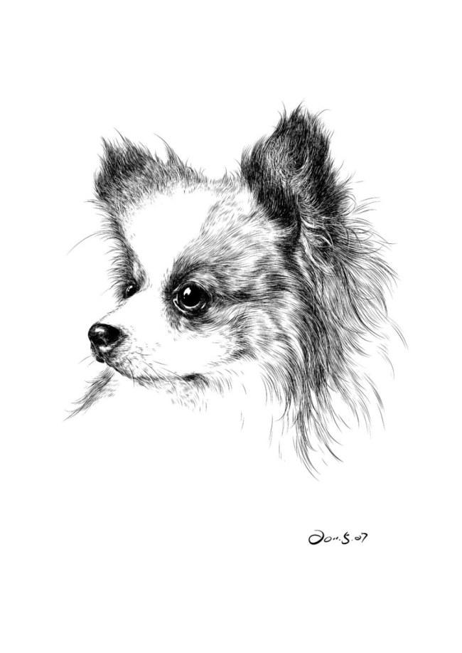 动物钢笔画