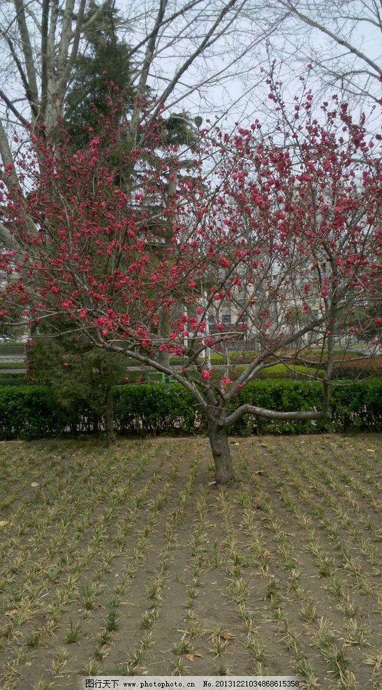 花树 草 花 公园 城市一角 树 自然风景 自然景观 摄影 300dpi jpg
