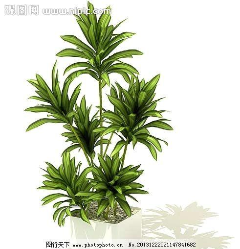 植物 室内 盆栽模型 绿色 家居 模型 室内盆栽与景观树木模型 室内