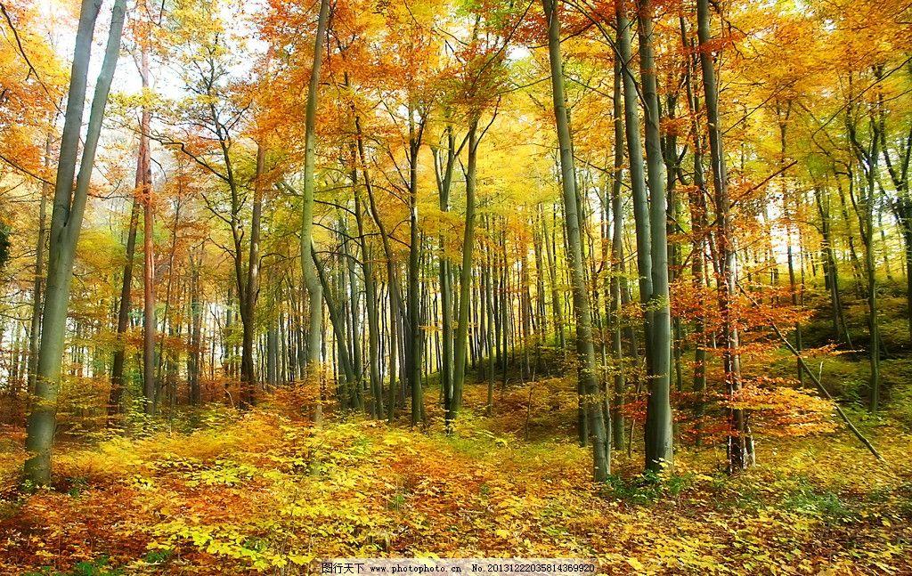 树木 林子 树林 秋天森林 森林图片 森林素材 森林 树木树叶 生物世界