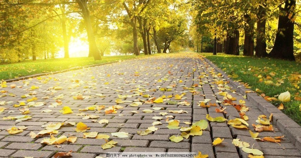 落叶风景 树 秋天景色 落叶 阳光 小路 风光 秋色 草坪 黄叶 秋意图片