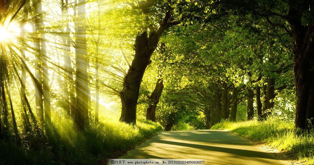 阳光绿色树林 阳光 绿色 树林 背景 桌面 自然风景 自然景观 摄影 72