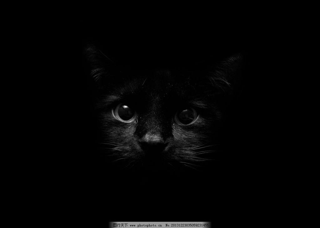 黑色猫咪 黑色 猫咪 可爱 背景 桌面 野生动物 生物世界 摄影 72dpi