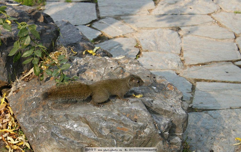 松鼠 西湖风景区 石头 动物 景区松鼠 野生动物 生物世界 摄影 72dpi