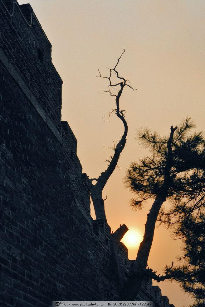 古树古城墙 大树 枯枝 绿叶 太阳 阳光 青砖 天空 历史遗迹