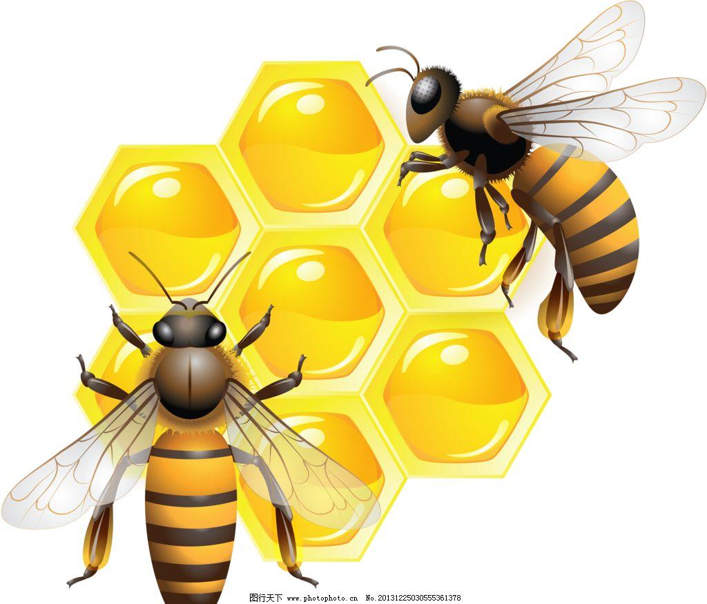 高中生物遗传蜜蜂图解