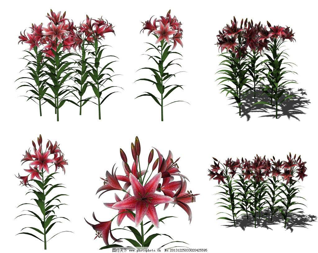 百合 花卉 各种百合 红百合 鲜花 花边 边框 装饰花 花朵组合