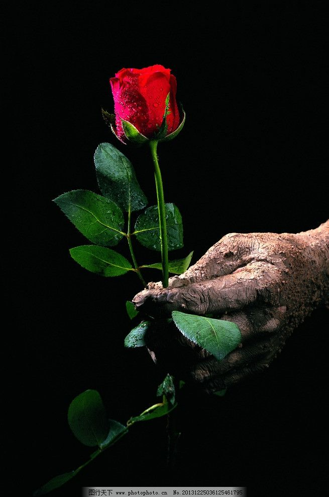 手拿玫瑰图片