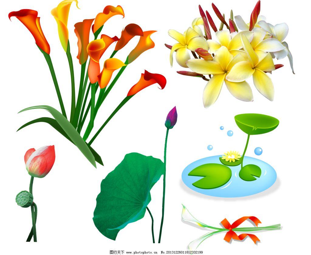手绘花卉 手绘百合 百合 马蹄莲 荷花 荷叶 百合移门 百合图案 手绘