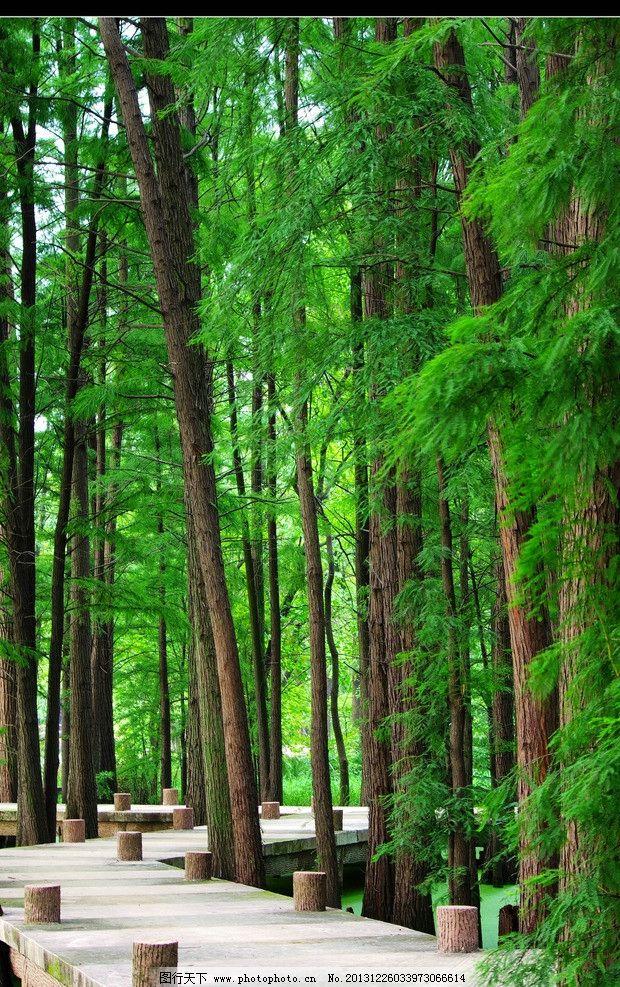 壁纸 风景 森林 桌面 620_987 竖版 竖屏 手机