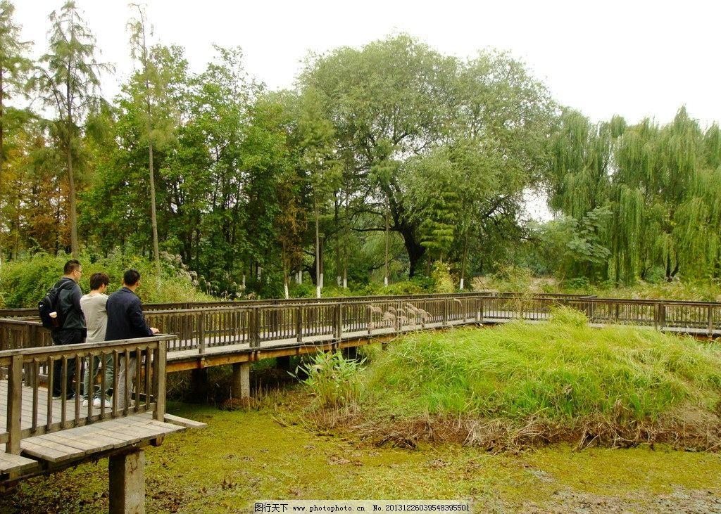 湿地公园 湿地 公园 园林 景观 栈道 园林建筑 建筑园林 摄影 72dpi