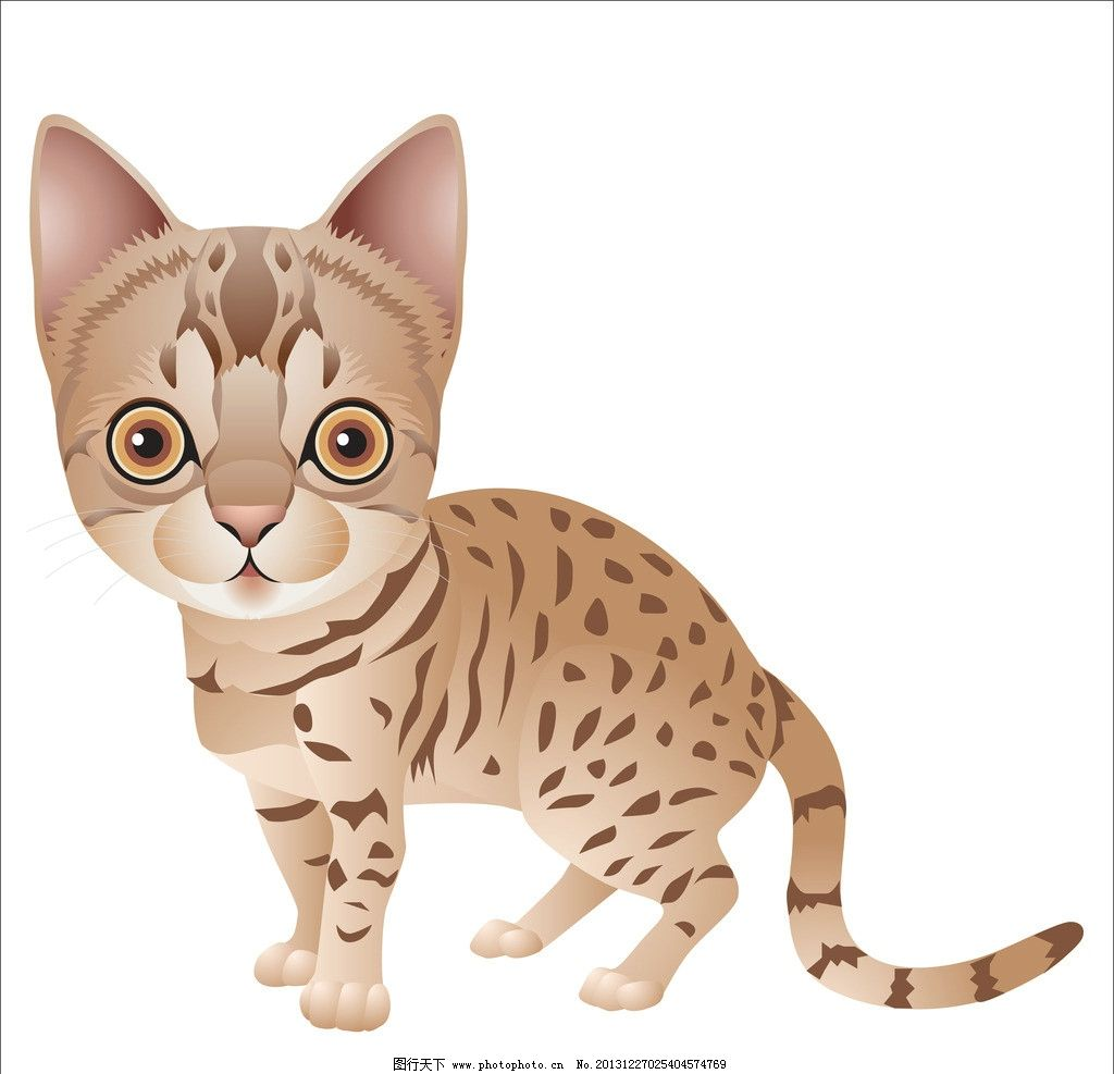 小猫 动物 可爱猫 猫咪 卡通 手绘画 插画设计 矢量卡通设计