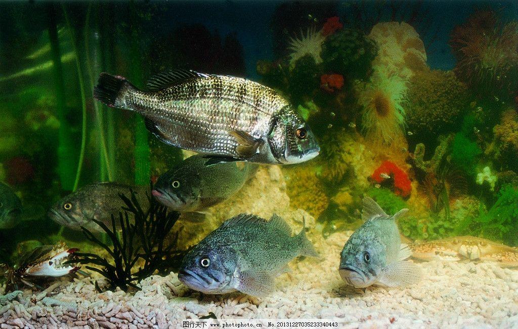 活鱼 动物 名贵 水里 水底 大鱼 鱼缸 鱼类 生物世界 摄影