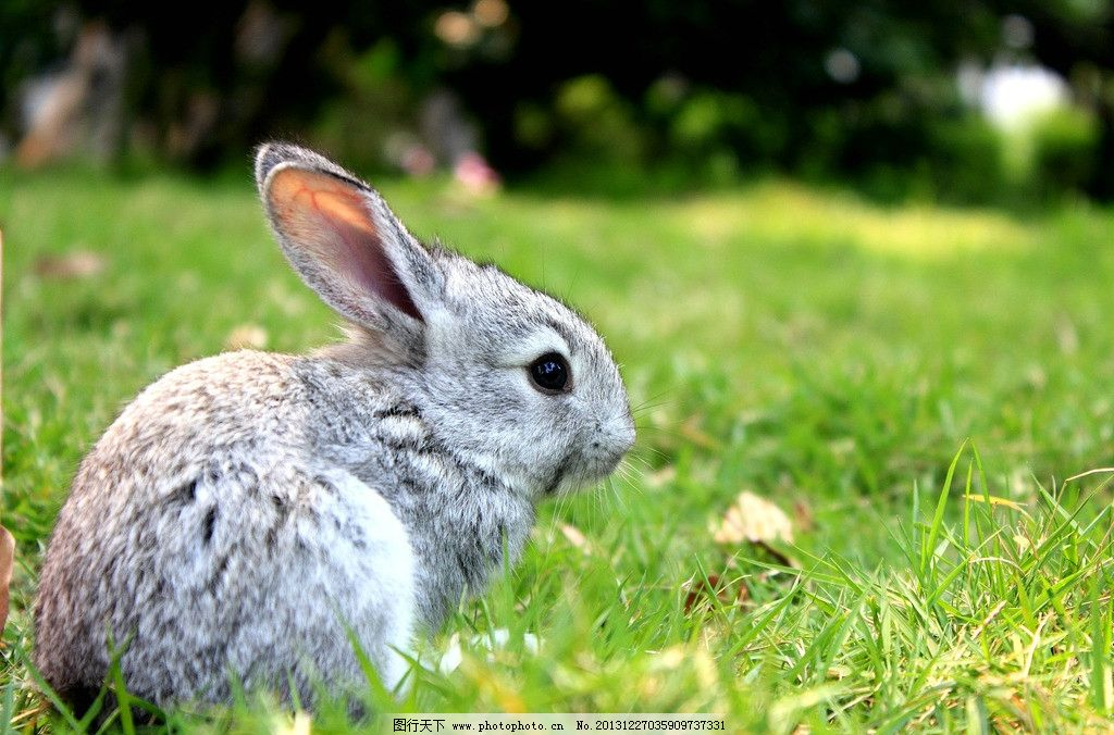 兔子 小动物 可爱 生物 生物世界 生物摄影 宠物 动物 家禽 家禽家畜