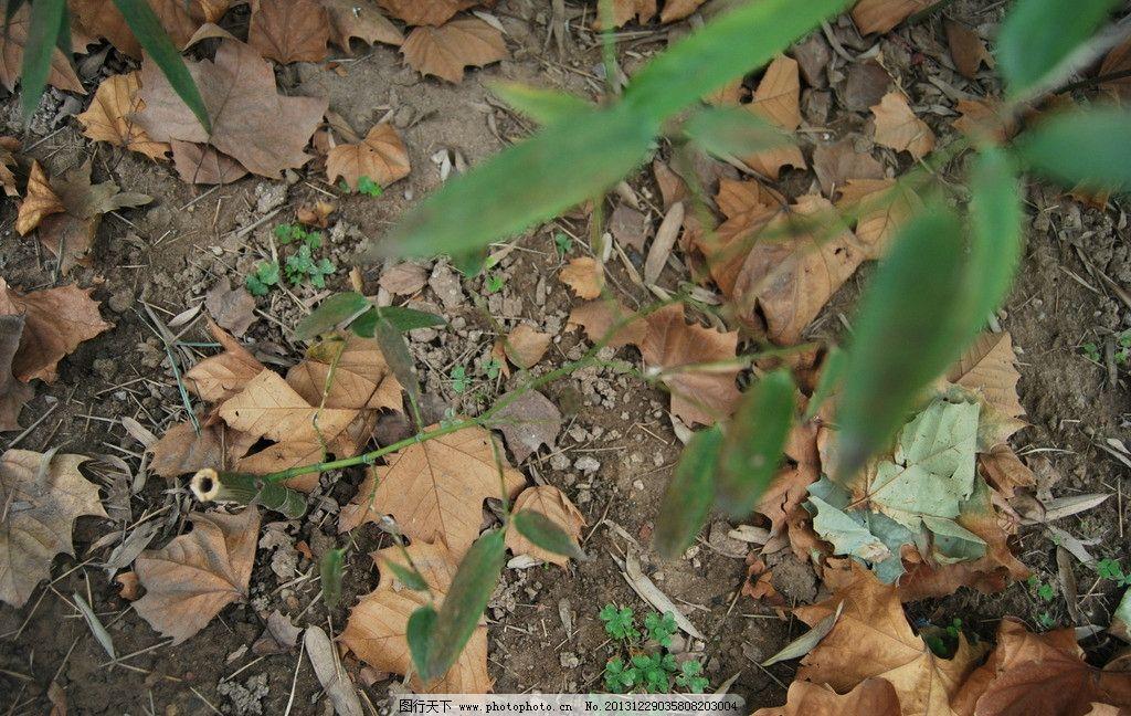 竹子图片_树木树叶_生物世界