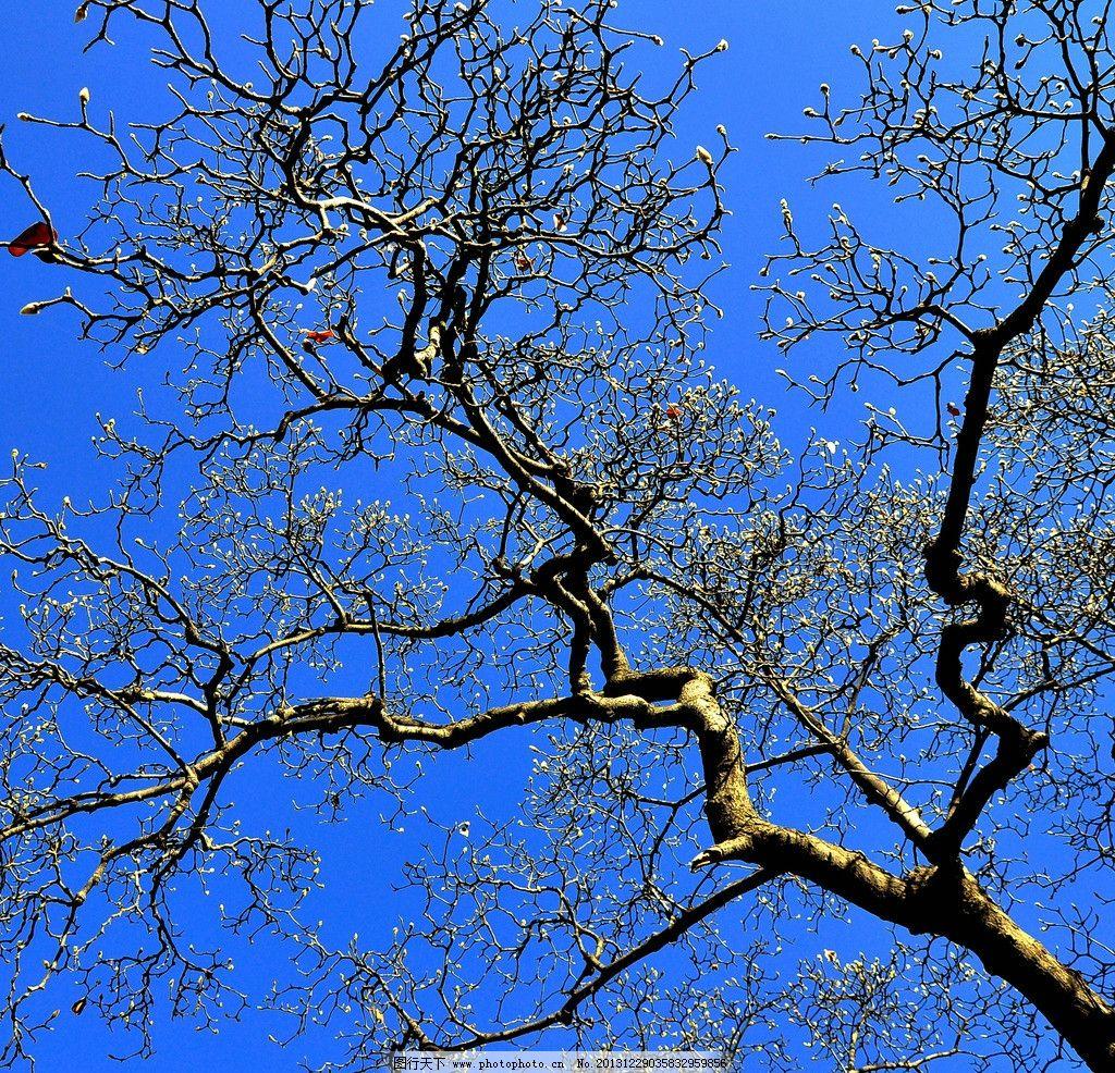 下雪后的树 雪 冬天 自然风景 白雪 树木树叶 生物世界 摄影 300dpi