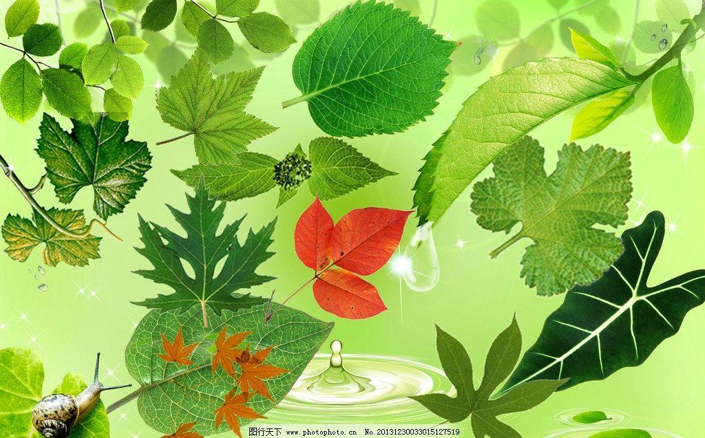 背景 壁紙 花 綠色 綠葉